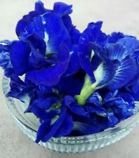 Blue Butterfly Pea50//100 SEEDS Clitoria Ternate Vine100/% new Organic Sir Lanka