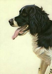 Nigel-Hemming-JUST-DOGS-BLACK-amp-WHITE-ENGLISH-SPRINGER-SPANIEL-Gun-Dogs-Art