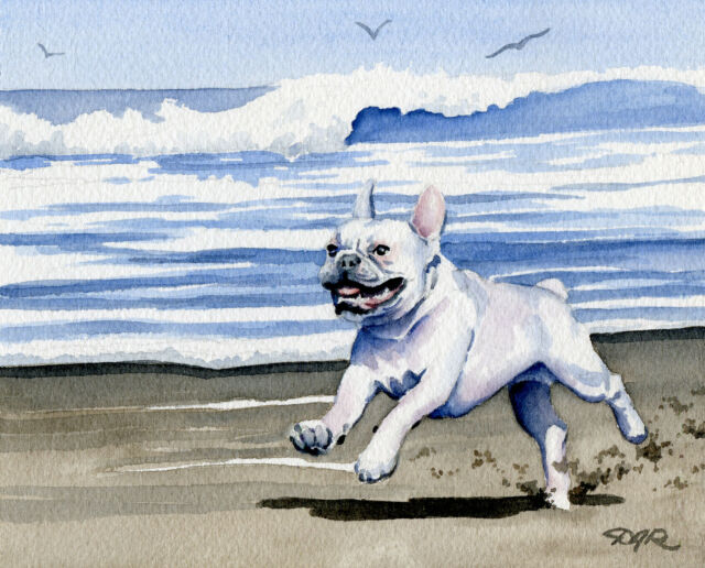 White FRENCH BULLDOG BEACH Watercolor 11 x 14 ART Print Signed by Artist DJR