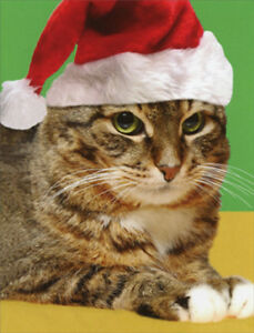 4b3907c414 Cat in Santa Hat Package of 8 Recycled Paper Greetings Funny ...