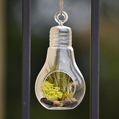 Clear Bulb Hanging Glass Terrarium Candle Holder Airplant Garden