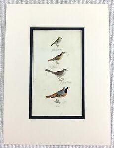 1841 Antico Uccello Stampa Canna Warbler Dorato Crested Wren Mano Colorato