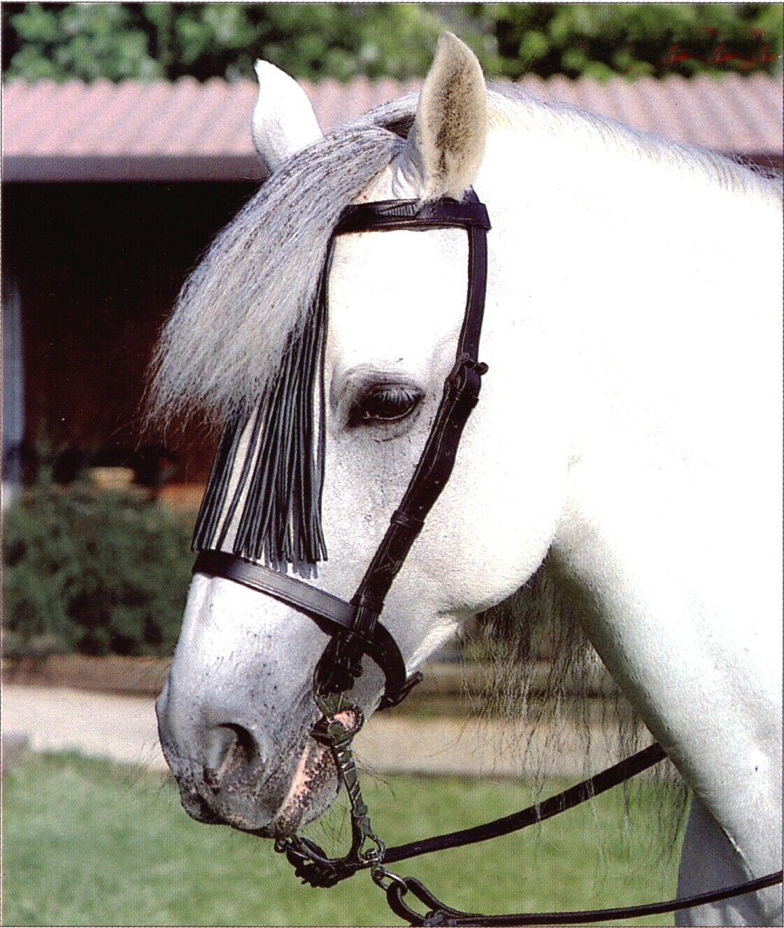 Bridle Vaquera Leather with Fringe Complete Reins