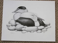 EIDER PRINT BY KEITH MUELLER SIGNED AND NUMBERED   DECOY