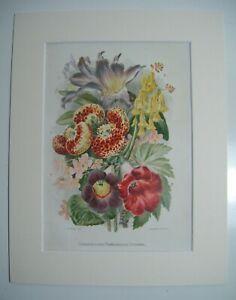 Antique c1880 Chromolithograph Botanical Floral Print ~ HERBACEOUS FLOWERS
