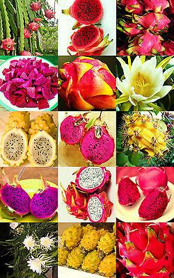 PITAYA FRUIT MIX edible fruits hylocereus undatus cactus succulent seed 50 seeds