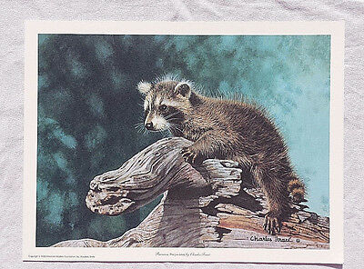 "1926 Vintage ANIMALS /""RACCOON/"" GORGEOUS COLOR Art Print Lithograph"