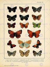 Pintura insecto deuchert polillas mariposa placa 4 Variedad Impresión de Arte Poster HP1235