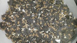 pva bags 38 mini pre filled pre tied pva mesh carp balls