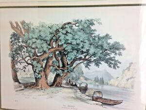 Art Geo Barnard Signed Circa 1868 The Walnut No 21 Lithograph Forest Series Rare Preventing Hairs From Graying And Helpful To Retain Complexion Art Prints