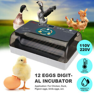 12 Digital Egg Incubator Chicken Hatcher Automatic Turning Temperature Control