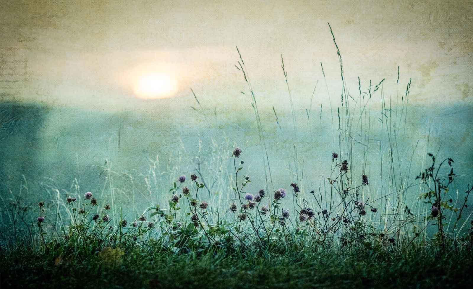 WALL MURAL PHOTO WALLPAPER XXL Grassland Meadow Field Flowers Grass (1X-1026605W