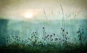 Carta Da Parati Prato.Wall Mural Photo Wallpaper Xxl Grassland Meadow Field Flowers Grass