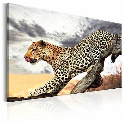 Jaguar in der Natur Wandbild in verschiedenen Größen
