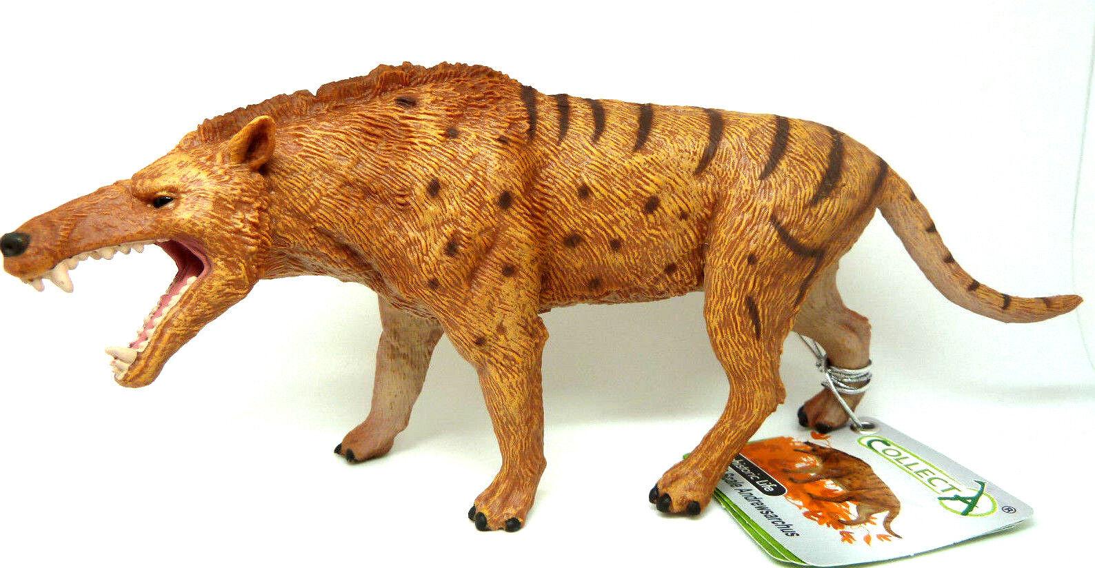 O1) Collecta (88772) ANDREWSARCHUS Prehistoric Life 1 20 Dinosaur Dino