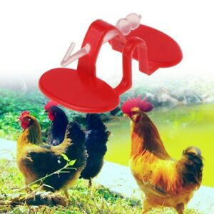 Details about 50Set/Bag Chicken Glasses Pheasant Farm Supplies Rooster Anti  Pecking Accessory