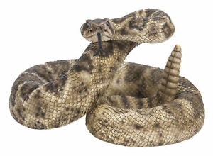 Real Rattlesnake Taxidermy Snake Parts Skin Rattle Pack Educational Science Gift