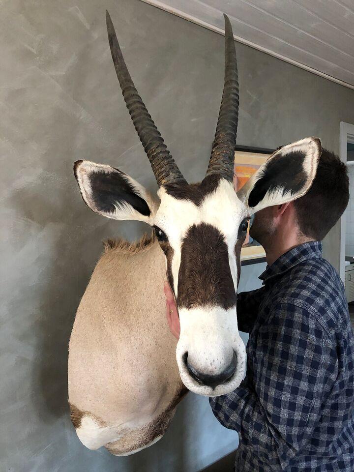 Udstoppede dyr, Oryx