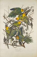 The Birds of America, Plate 26: Carolina Parrot John Audubon Vögel B A3 02644