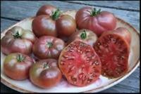 Tomato Cherokee Purple Great Garden Heirloom Vegetable By Seed Kingdom Bulk