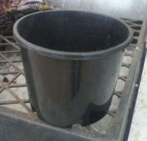 CACTUS-amp-SUCCULENT-FLOWER-POTS-10-for-3-00-140mm-6-034-squat-Pots
