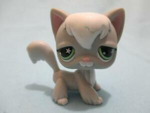 Littlest Pet Shop 954 Grey Angora Cat w Green Star Eyes Lps Authentic LPS
