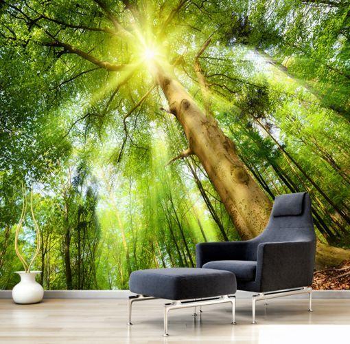 3D Woods bequeme Sonnen 70 Fototapeten Wandbild Fototapete BildTapete Familie DE