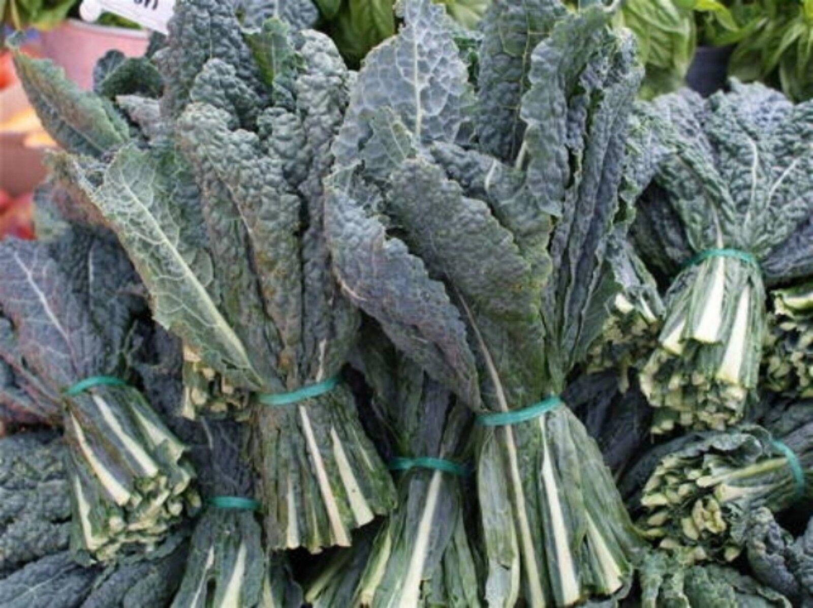 Black (Lacinato, Dinosaur) Kale Seeds 400+ 2021 Seeds Max. Shipping/order