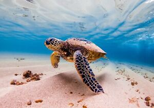 Awesome-Swimming-Sea-Turtle-Poster-Size-A4-A3-Ocean-Animals-Poster-Gift-8503