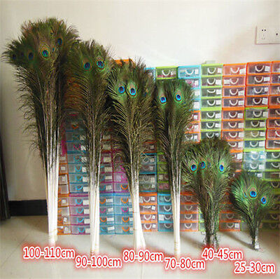 Wholesale beautiful natural peacock feathers eyes 10-40 inches/25-100 cm