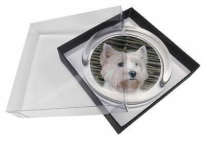 AD-W33PW West Highland Terrier Dog Glass Paperweight in Gift Box Christmas Pres