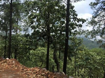 Terreno en Venta en Mixtla 1,000 hectareas con vocacion de agave