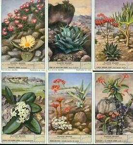 LIEBIG : S_1625 : 'Plantes grasses
