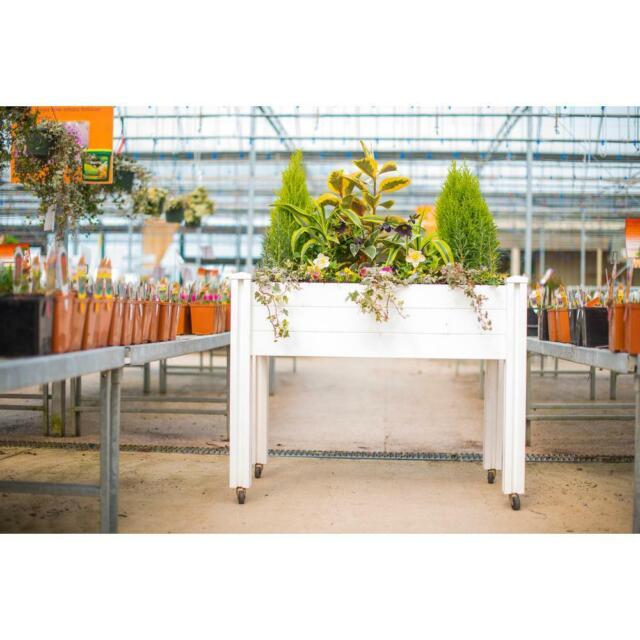 Vita Gardens 2x4 Sun Seeker Raised Garden white on raised tree planter, raised box planter, raised rectangle planter, raised bamboo planter,