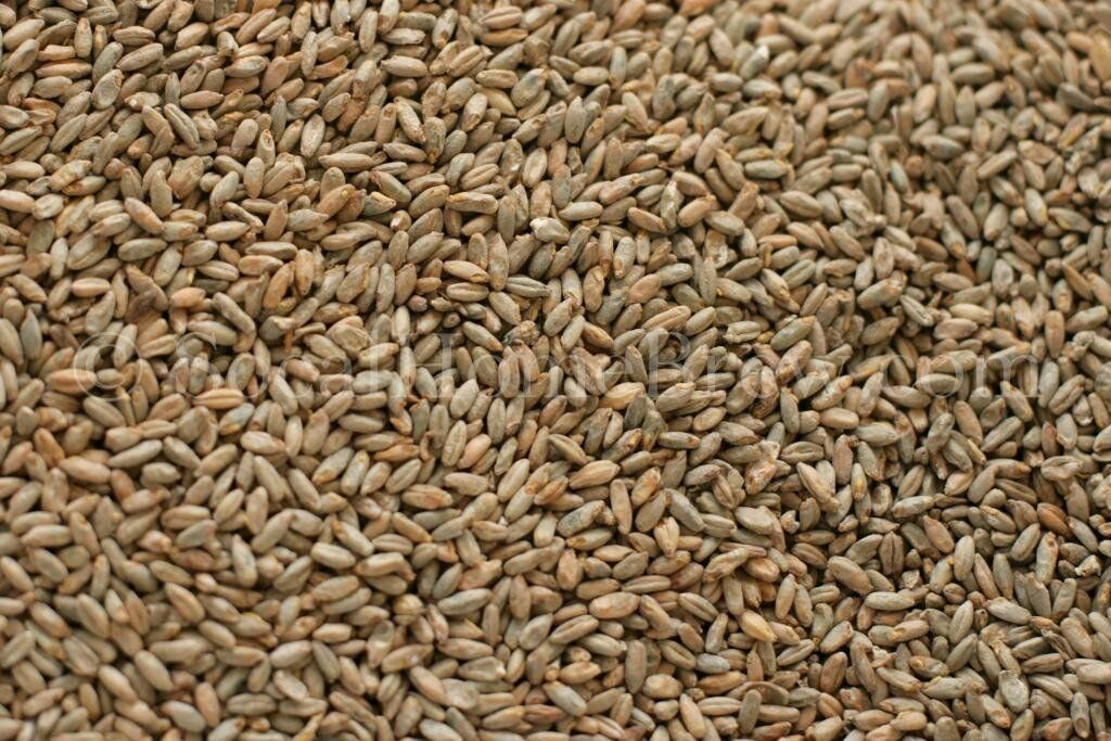 s l1600 Briess Rye Malt 5 lb for Home Brew Beer Making
