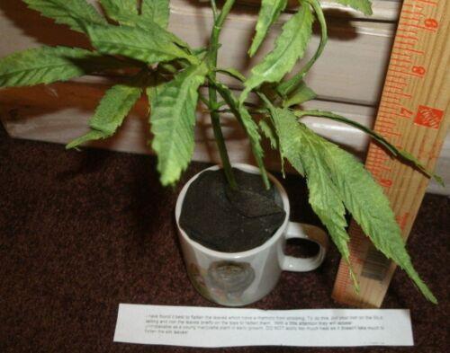 "Fake Marijuana Silk Plant 12/"" Tall Herb Weed Pot Gag Gift Police Education Prop!"