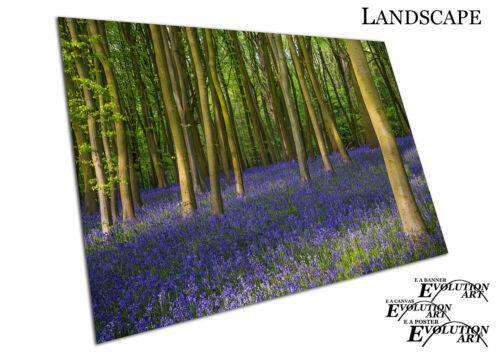 Ancient bluebell wildflowers woods in Oxfordshire Floral Art Poster Print X1532