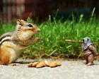 Squirrel / Squirrels 8 x 10 GLOSSY Photo Picture IMAGE #8