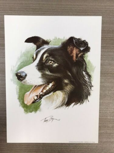 BORDER COLLIE Dog Print by Tony Bryne