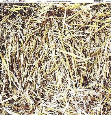 """Hay"" 12x12  Paper by Sugar Tree"
