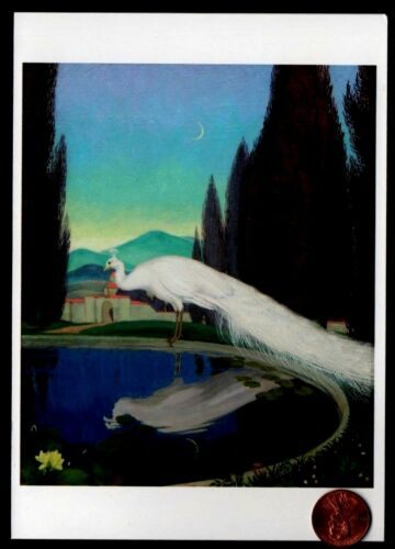 NEW Beautiful White Peacock Tail Feathers Pond Moon Reflection  Blank Note Card