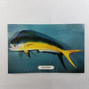 Postcard-DOLPHIN-Coryphaena-Hippurus-Unposted