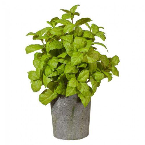 Basilic Busch 30 cm ART Plante au zementtopf
