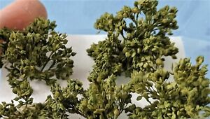 Warhammergreen-Shrub-Bloom-Green-Olive-With-Leaves-Defined-2-1-5-8in-6pcs