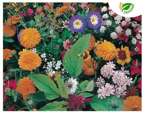 variadas seeds + 2.000 semillas Mezcla de Flores Campestres