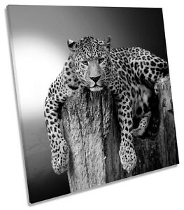 Leopard-Sunset-B-amp-W-CANVAS-WALL-ART-SQUARE-Picture-Print
