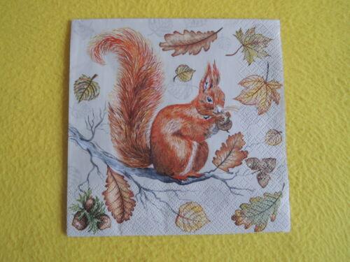 5 serviettes écureuil squirrel Feuilles Automne AST Serviettes technique 1//4 Ecrou