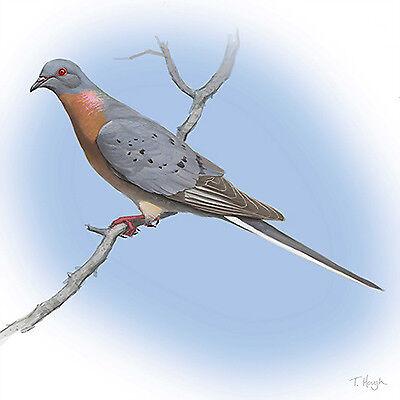 The Last Pigeon