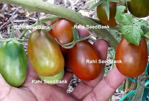 Black-Plum-Tomato-A-Rare-Beautiful-Black-Mahogany-hued-Fat-fruits-10-Seeds