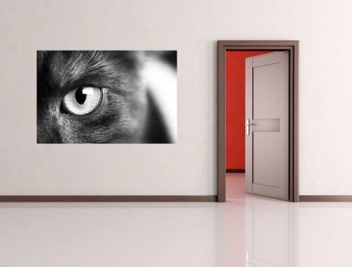 Fototapete Katzenauge
